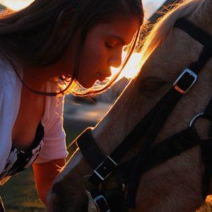paarden producten