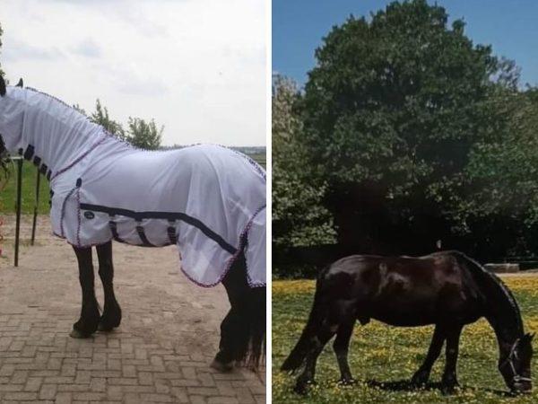 Mijn paarden met huidirritatie